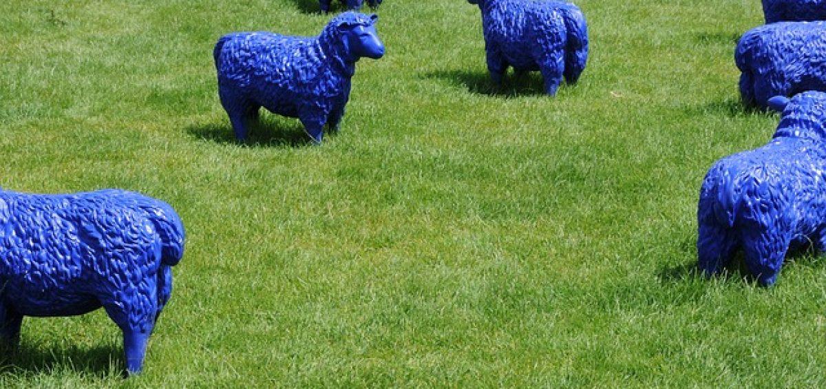 ovejas azules coaching marca personal formacion huelva