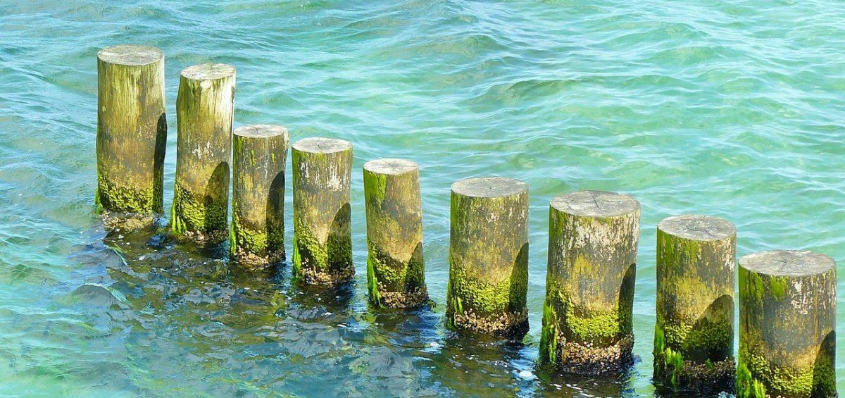 orilla tronco