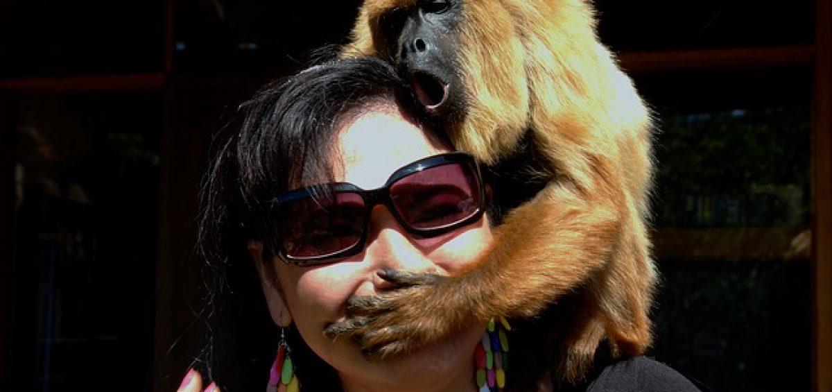 mujer mono