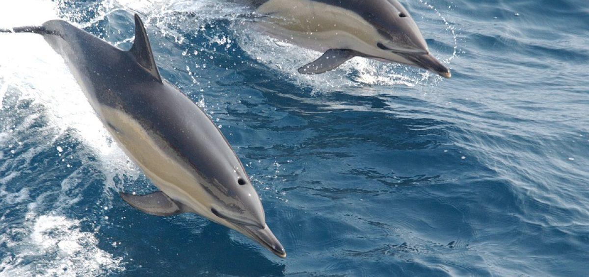 delfines Empleo Coaching Formación Marca Personal Branding Huelva David Barreda