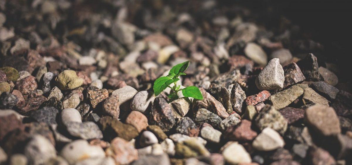 mentalidad fija o de crecimiento